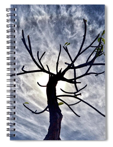 Dead Tree In St. Johns Antigua Spiral Notebook