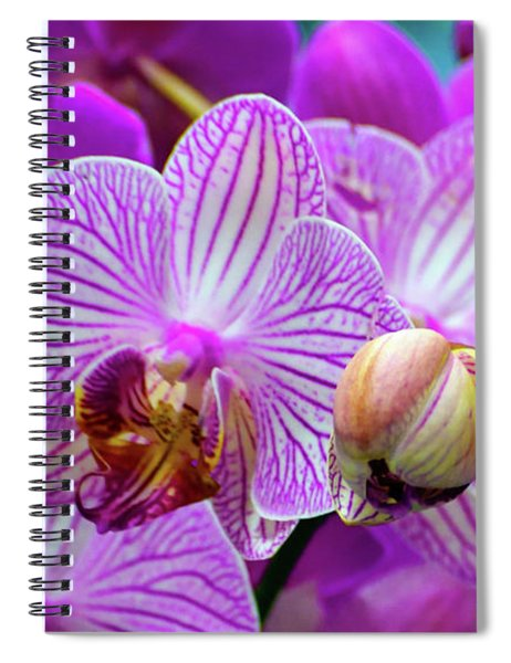 Spiral Notebook featuring the photograph Decorative Fuschia Orchid Still Life by Mas Art Studio