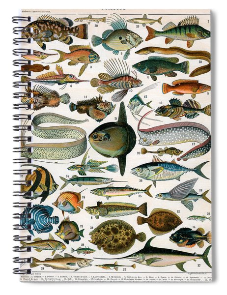 Decorative Print Of Poissons By Demoulin Spiral Notebook