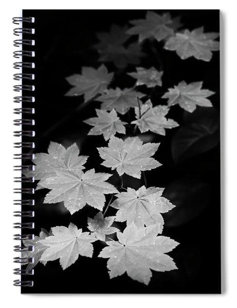 Deep Forest Maple Spiral Notebook