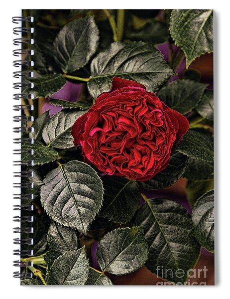 Deep Red Rose Spiral Notebook