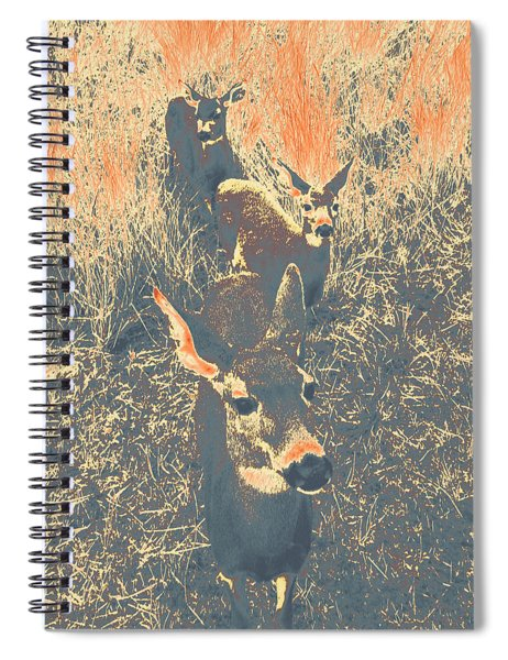 Deer #11 Spiral Notebook