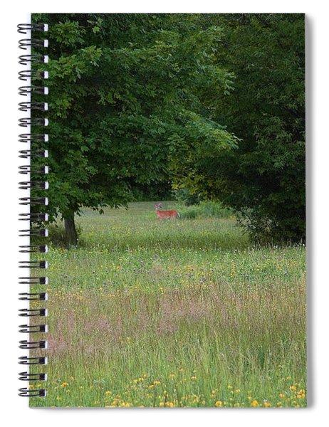 Deer In A Meadow At Dawn Spiral Notebook