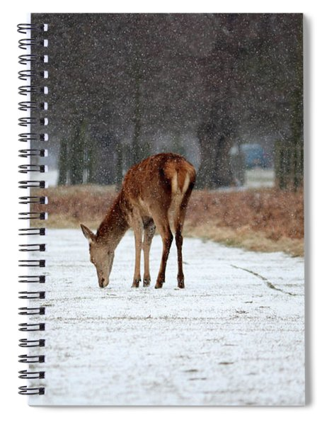 Deer In Snow Spiral Notebook