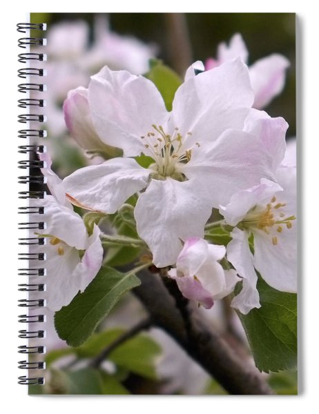 Delicate Apple Blossoms Spiral Notebook