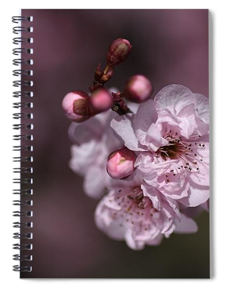 Delightful Pink Prunus Flowers Spiral Notebook