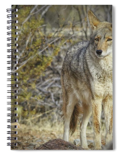 Desert And The Coyote Spiral Notebook
