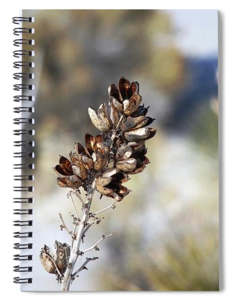 Desert Magic Spiral Notebook