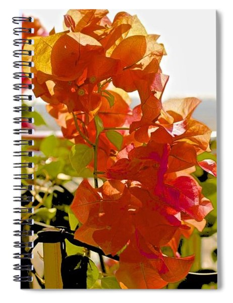 Desert Orange Spiral Notebook