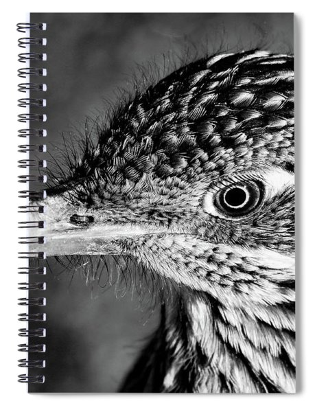 Desert Predator, Black And White Spiral Notebook