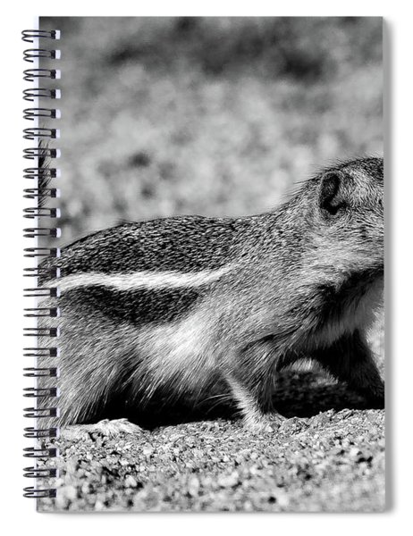 Scavenger, Black And White Spiral Notebook
