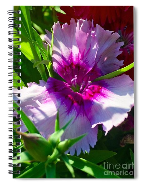 Dianthus Carnation Spiral Notebook