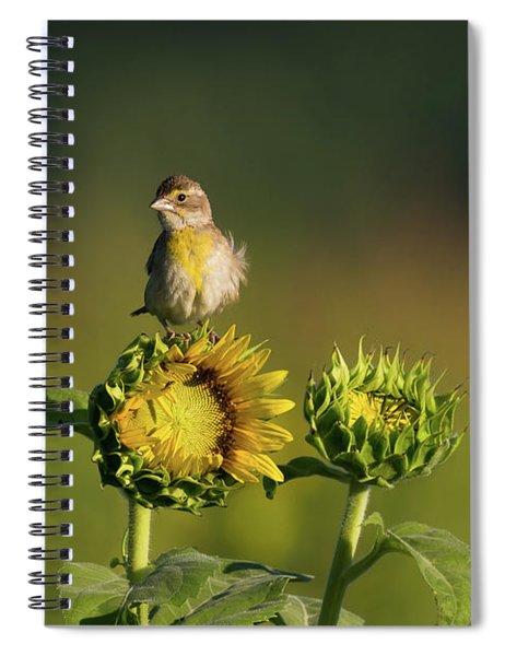 Dickcissel Sunflower Spiral Notebook