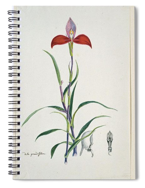 Disa Uniflora Bergius Red Disa Or Pride Of Table Mountain, Robert Jacob Gordon, 1777 - 1786 Spiral Notebook