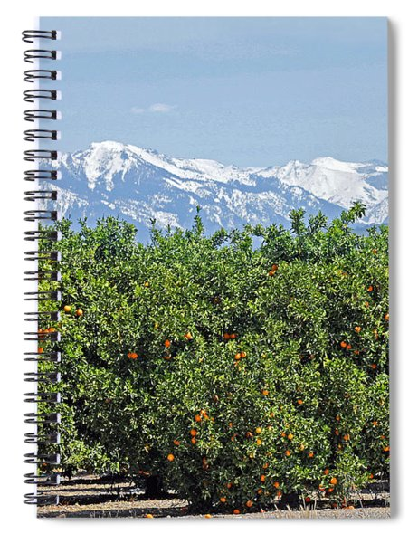 Dm6850-e Orange Grove And The Sierra Nevada Ca Spiral Notebook
