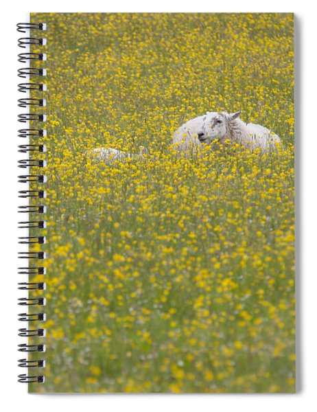 Do Ewe Like Buttercups? Spiral Notebook