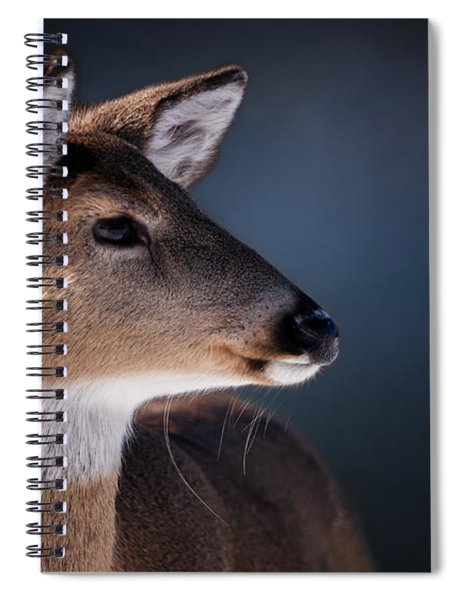 Doe Portrait - White Tailed Deer Spiral Notebook