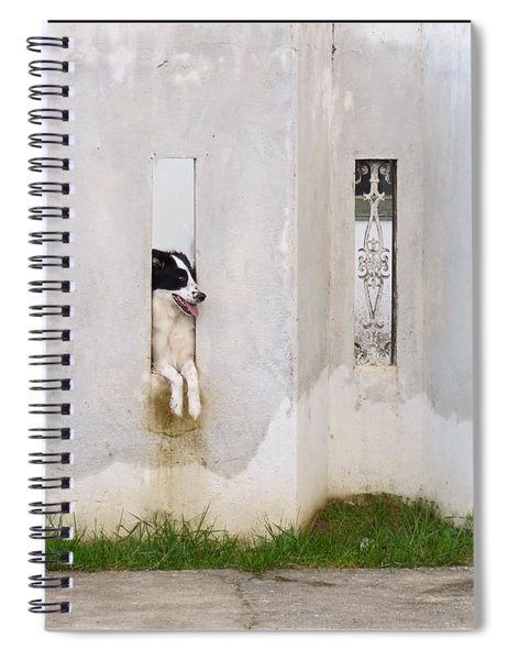 Dog Watching Spiral Notebook