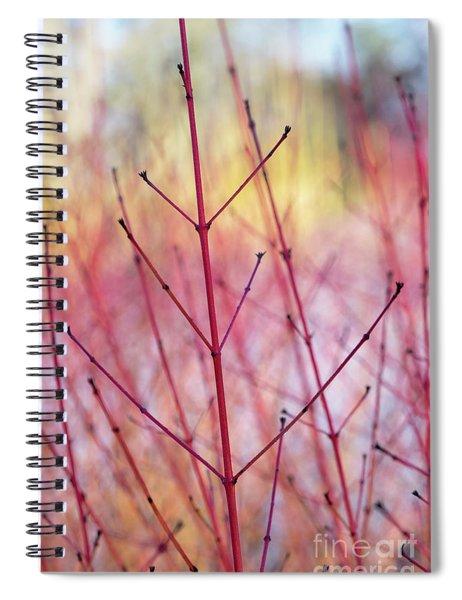 Dogwood Midwinter Fire Stems Spiral Notebook