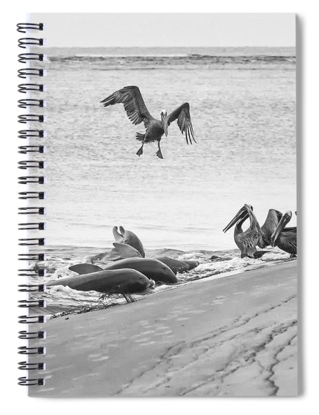Dolphin And Pelican Party Spiral Notebook