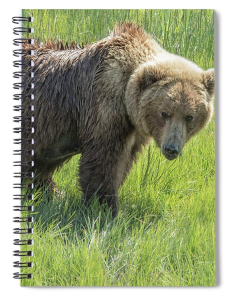 Don't Mess With Mama Bear Spiral Notebook by Belinda Greb