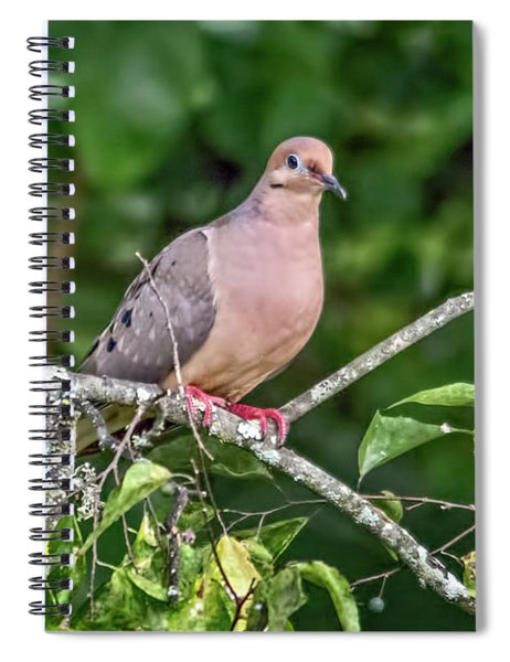 Dove On A Branch Spiral Notebook