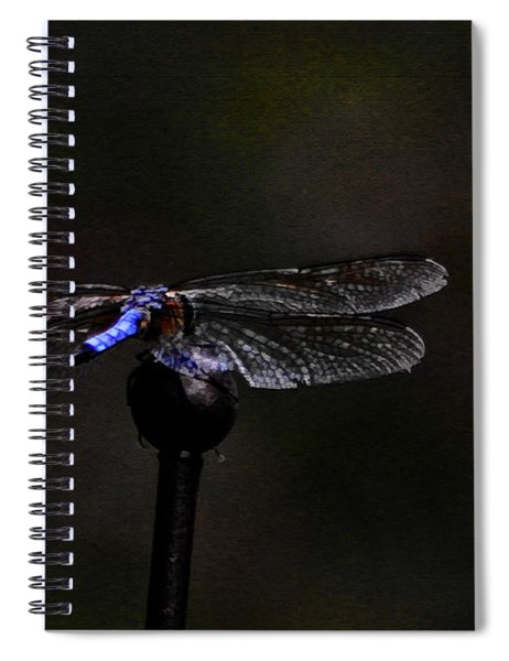 Dragonfly Blues Spiral Notebook