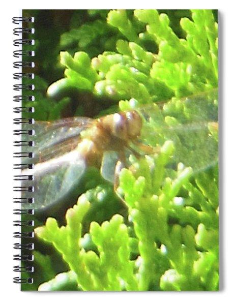 Dragonfly Evergreen Spiral Notebook