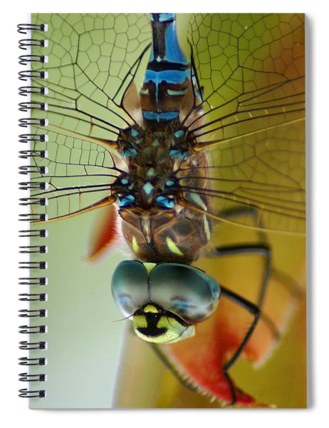 Dragonfly In Thought Spiral Notebook