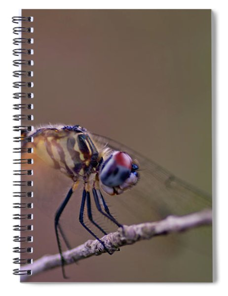 Dragonfly On Twig Spiral Notebook