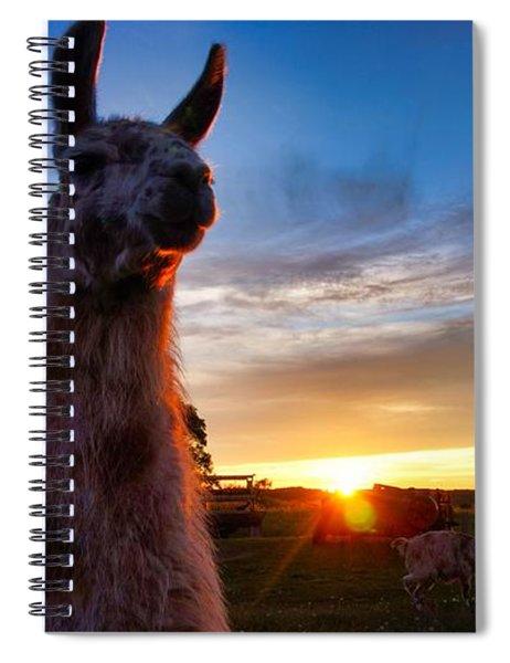 Drama Llamas Spiral Notebook