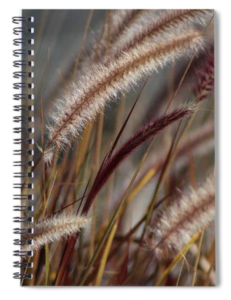 Dried Desert Grass Plumes In Honey Brown Spiral Notebook