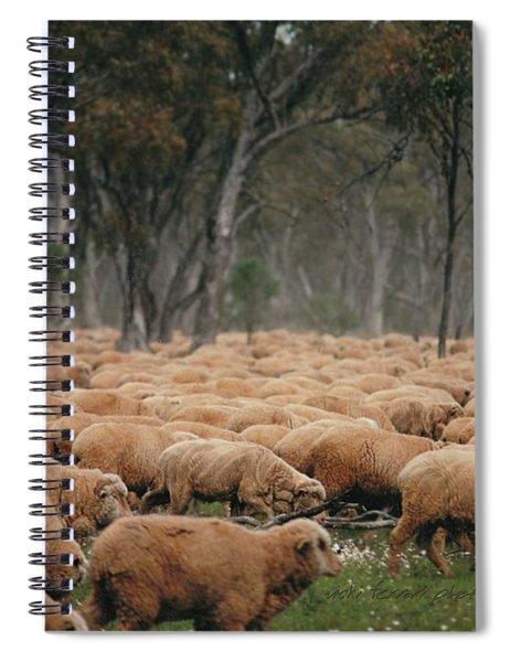 Droving Sheep  At Albert Australia Spiral Notebook