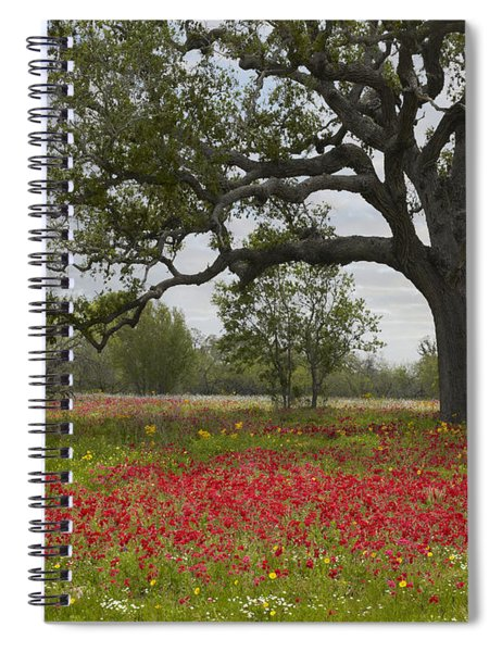 Drummonds Phlox Meadow Near Leming Texas Spiral Notebook