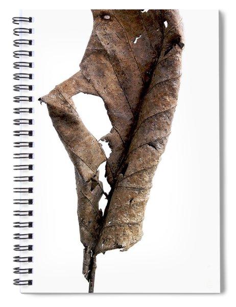Dry Leaf Spiral Notebook