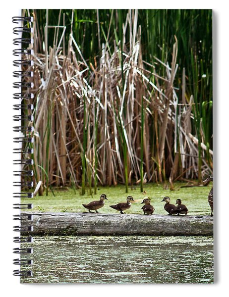 Ducks All In A Row Spiral Notebook