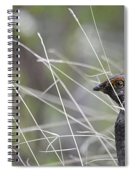 Dusky Grouse Spiral Notebook