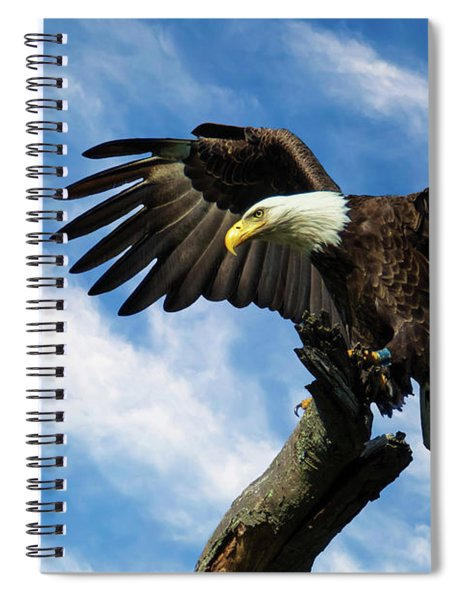 Eagle Landing On A Branch Spiral Notebook