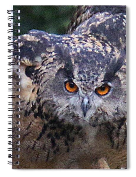 Eagle Owl Close Up Spiral Notebook