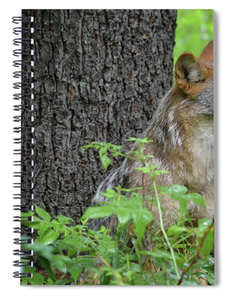 Early Morning Coyote In Maine Spiral Notebook