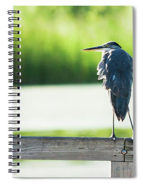Early Morning Great Blue Heron Spiral Notebook