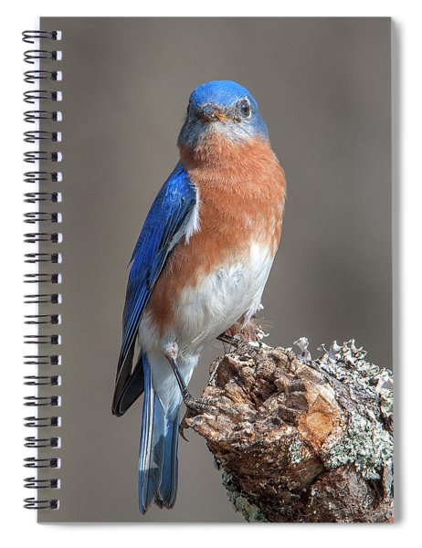 Eastern Bluebird Dsb0300 Spiral Notebook