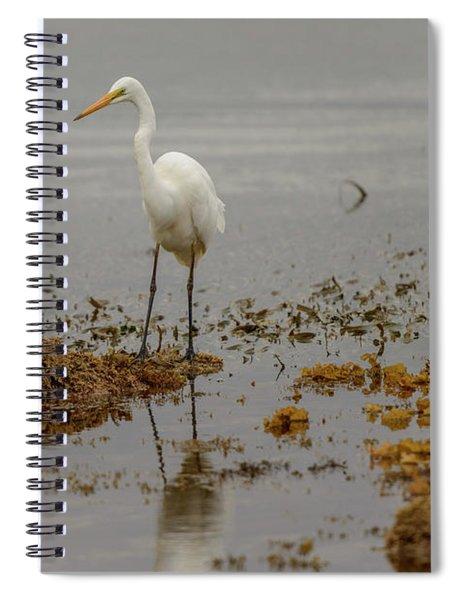 Eastern Great Egret 05 Spiral Notebook