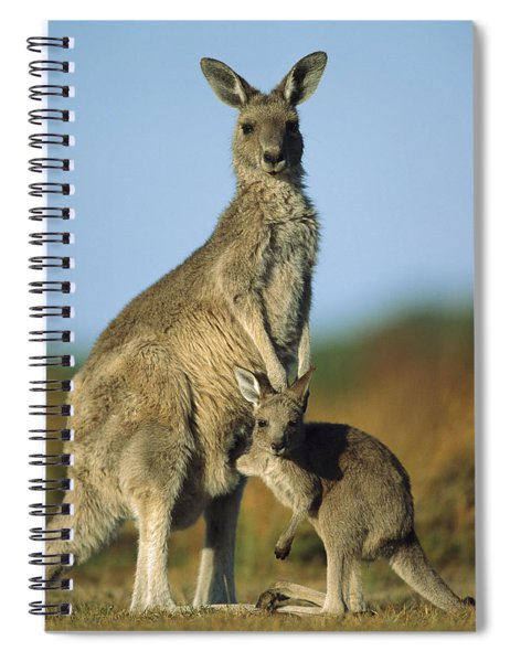 Eastern Grey Kangaroo And Her Joey Spiral Notebook