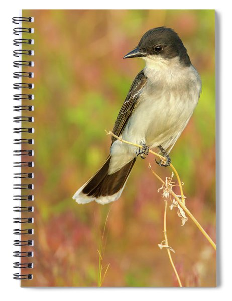 Spiral Notebook featuring the photograph Eastern Kingbird In Colorado by John De Bord