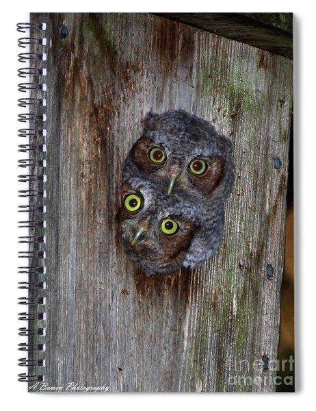 Eastern Screech Owl Chicks Spiral Notebook
