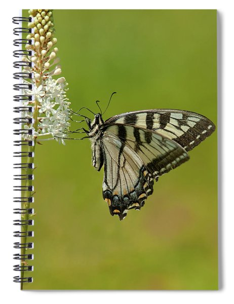 Eastern Swallowtail On Fly Poison Spiral Notebook