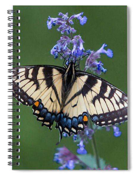 Spiral Notebook featuring the photograph Eastern Tiger Swallowtail Wingspan by Patti Deters