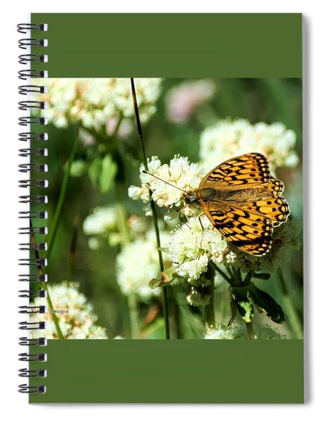 Edward's Fritillary On Wildflower Spiral Notebook