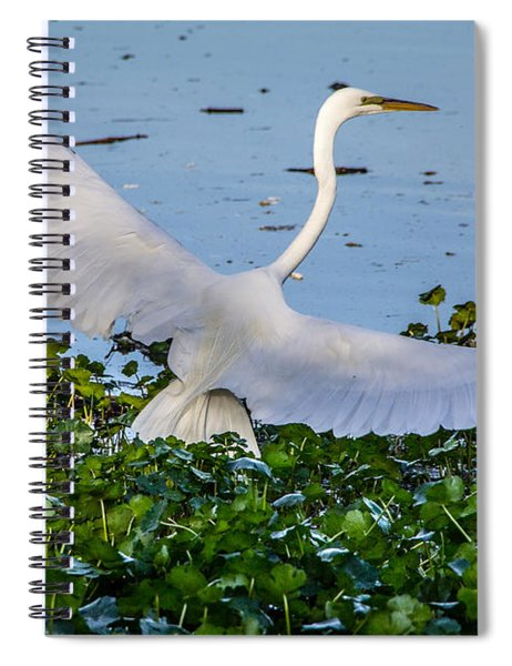 Egret With Wings Spread Spiral Notebook